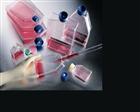 抗人肝癌单抗HAb18杂交瘤细胞;HAb18