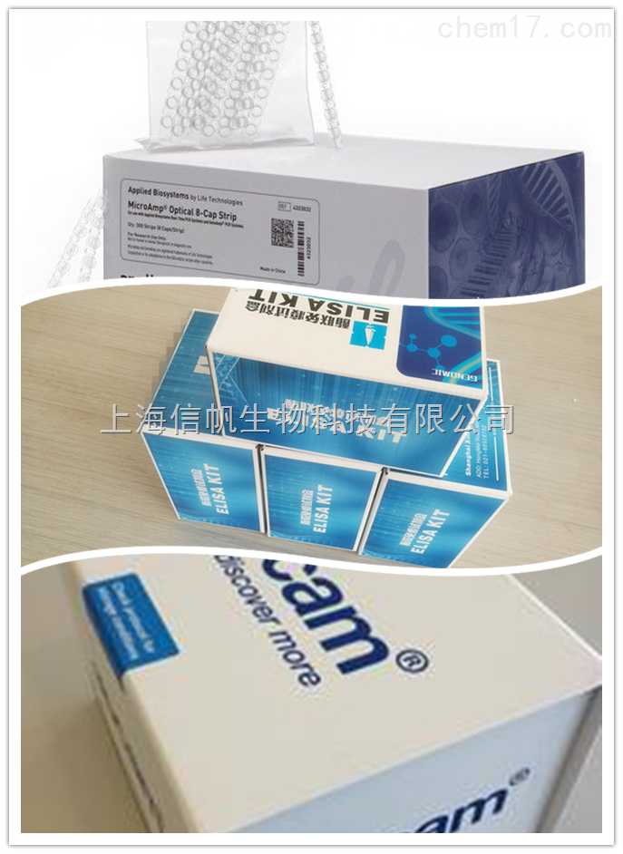 人IL-12 p40 elisa试剂盒,白介素12 p40检测
