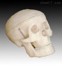 小型头骨模型  人体各大器官