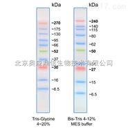 蛋白 Marker