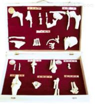 人体骨关节分类模型  教学模型