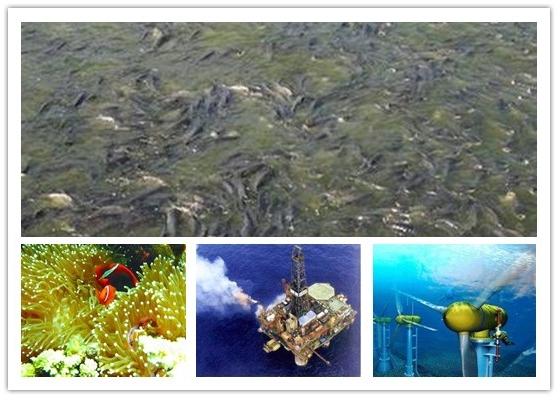 我国丰富的海洋资源
