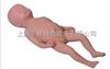 高级足月胎儿模型