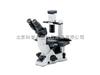 CKX-41倒置奥林巴斯CKX41倒置显微镜/CKX41倒置显微镜总代理/奥林巴斯CKX-41厂家