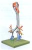 GD/A13006喉与气管、支气管树模型