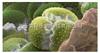 单细胞全转录组扩增 试剂盒