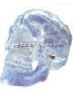 SMD00614自然大透明头颅  教学模型