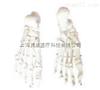 SMD020足骨  教学模型