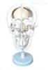 SMD009颅骨骨性分离模型  教学模型