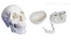 SMD0061三部分头颅骨模型 教学模型