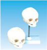 SMD0063新生儿头颅骨模型  教学模型